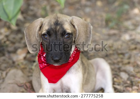 Cute puppy love isolated closeup with big eyes and floppy ears