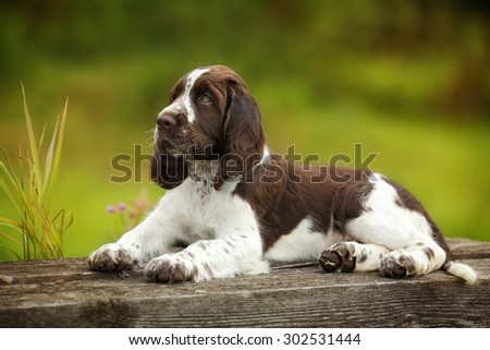 Cute puppy lying on the nature #302531444