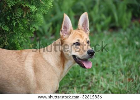 Cute Puppy named Bree