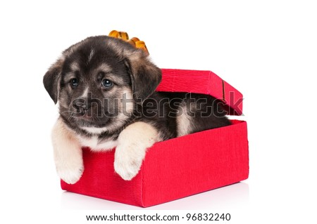Cute puppy of 1,5 months old in gift box on a white background - stock photo