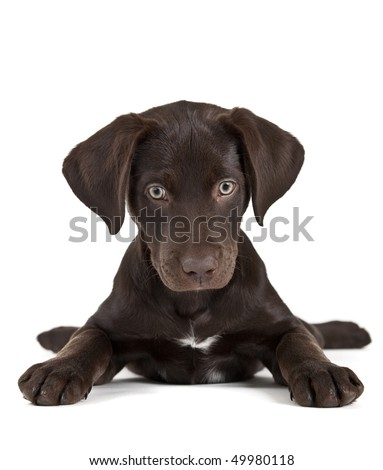 Cute puppy on white background facing camera - stock photo