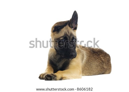 Cute puppy over white background