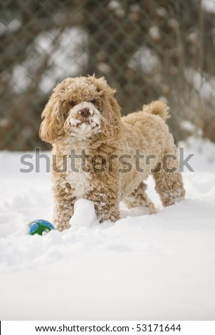 stock photo : Cute puppy playing in the snow