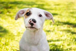 cute puppy playing outside. green grass, sunny day. baby mutt portrait.