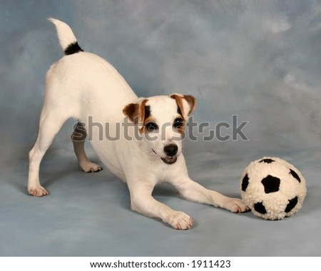 cute puppy playing with a toy soccer ball