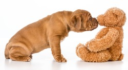 cute puppy reaching out to smell stuffed teddy bear