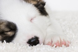 cute puppy sleeping on furry blanket