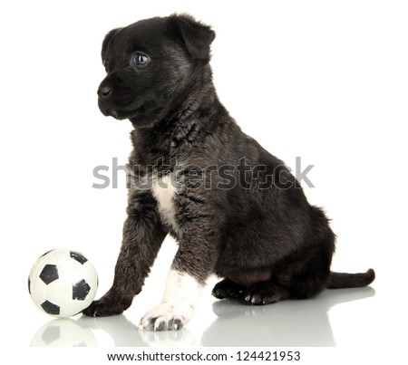 Cute puppy with ball isolated on white