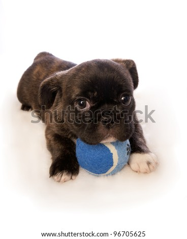 Cute puppy with blue ball isolated on white background