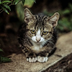 Cute Pussy Cat Siting On The Road And Wacthing There mom