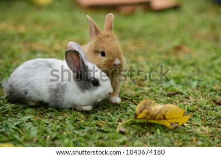 Cute rabbit, brown and white rabbit, mother and baby, walking in the lawn. Little rabbits are tricky in the garden. Rabbit on fresh green grass. little gray rabbit on green grass background.