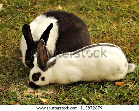 Cute rabbit on grass