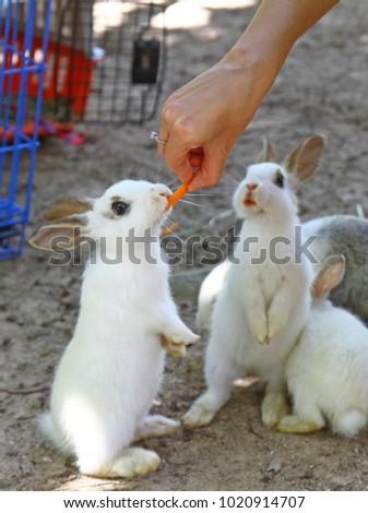 Cute rabbit on the farm. Little white rabbits