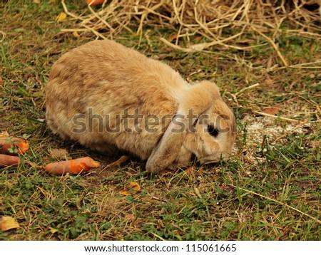 Cute rabbit on the grass - stock photo