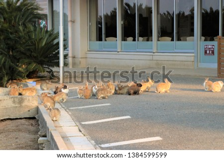 Cute Rabbits at Ohkunoshima island #1384599599