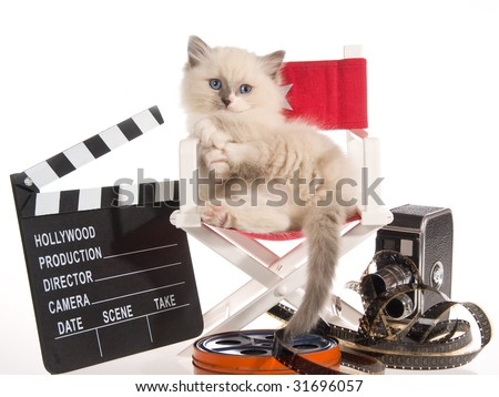 Cute Ragdoll kitten on director chair with movie props, on white background