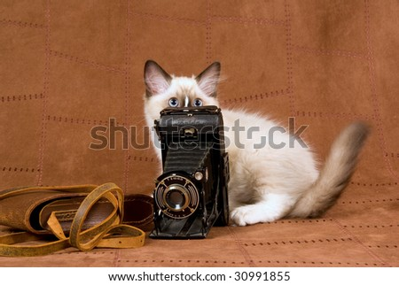 Cute Ragdoll kitten peeping out from behind vintage camera on suede background