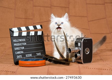 Cute Ragdoll kitten with movie clipboard, vintage movie camera and reel of film, on brown suede background