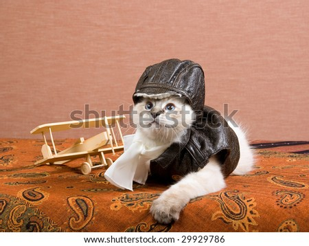 Cute Ragdoll kitten with pilot leather outfit and miniature wooden biplane on brown background