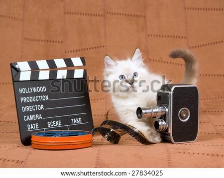 Cute Ragdoll kitten with vintage movie camera, reel of film and clapperboard movie clipboard on brown suede