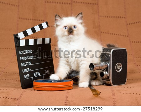 Cute Ragdoll kitten with vintage movie camera, reel of film and movie clipboard on brown suede background