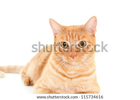 cute red cat looks isolated
