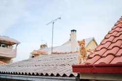 Cute red cat on tiled roof of old house.