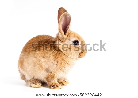 cute red easter bunny rabbit on ...