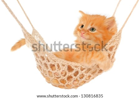 Cute red-haired kitten lying in hammock on a white background.