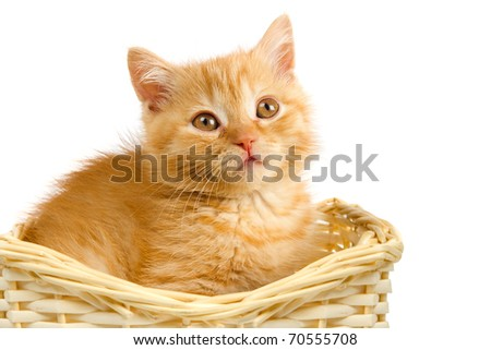 cute red kitten in basket on white