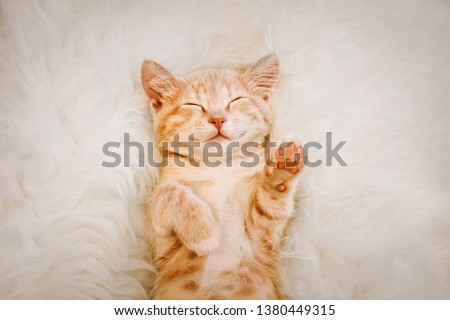 Cute, red kitten is sleeping on his back and smiling, paws up. Concept of sleep and good morning.