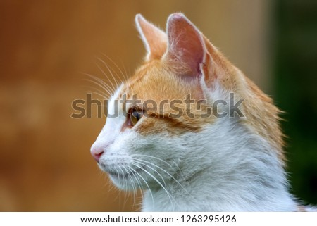 Cute red white cat portrait on nature blurred background.  Portrait of white ginger cat. Cat is small domesticated carnivorous mammal with soft fur. #1263295426