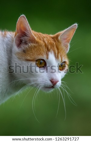 Cute red white cat portrait on nature green blurred background.  Portrait of white ginger cat. Cat is small domesticated carnivorous mammal with soft fur. #1263291727
