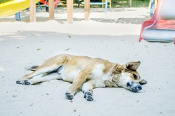 Cute redhaired dog lies on the sand in the playground and it is hot, against the background of children slides and swings
