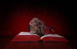 Cute rodent with reading glases look into a big, red  book.