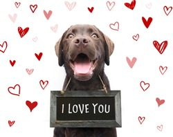 Cute romantic dog says i love you, text on sign board with red hearts valentine background animal love