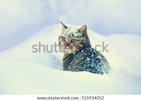 Cute sad cat sitting in the deep snow in blizzard #515934052
