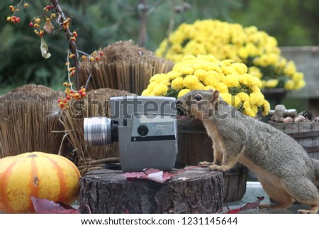 Cute scene of a squirrel looking through an old video camera, appearing tho he is taking pictures, surrounded by fall scenery.