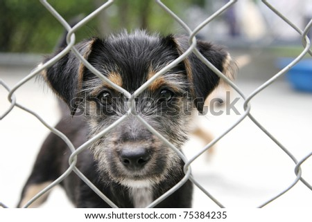 Cute scruffy pup looking out from behind the wire mesh of his pen