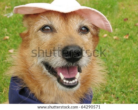 Cute scruffy terrier dog wearing a scarf and a pink hat with a big smile on her face