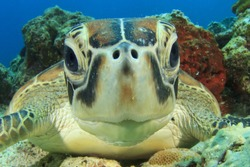 Cute Sea Turtle face
