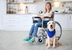 Cute service dog sitting on floor near girl in wheelchair indoors
