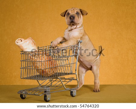 Cute Sharpei puppy with miniature shopping cart