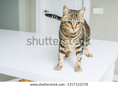 Cute short hair cat looking curious and snooping at home #1357122578