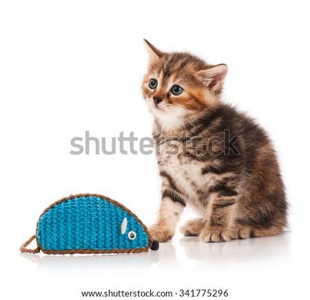 siberian mouse