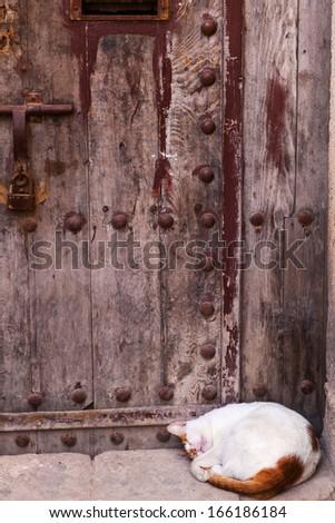 cute sleeeping cat in front of an antique door in Morocco