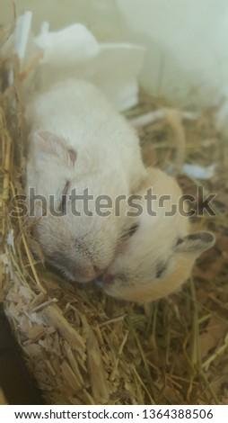Cute Sleeping Gerbils