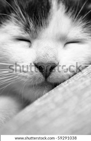 cute sleeping kitten in black and white