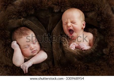 Cute sleeping new born twins inside the brown fur