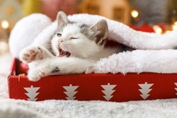 Cute sleepy kitten yawning in cozy santa hat in red box on background of ornaments and warm illumination lights. Atmospheric winter moments. Merry Christmas and Happy Holidays!